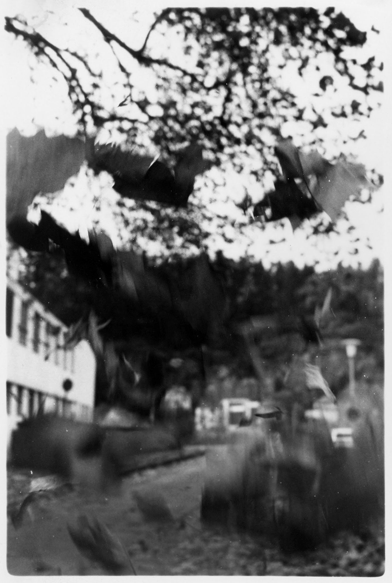 Falling leaves, motion blurred against a background of a house, a street and trees.