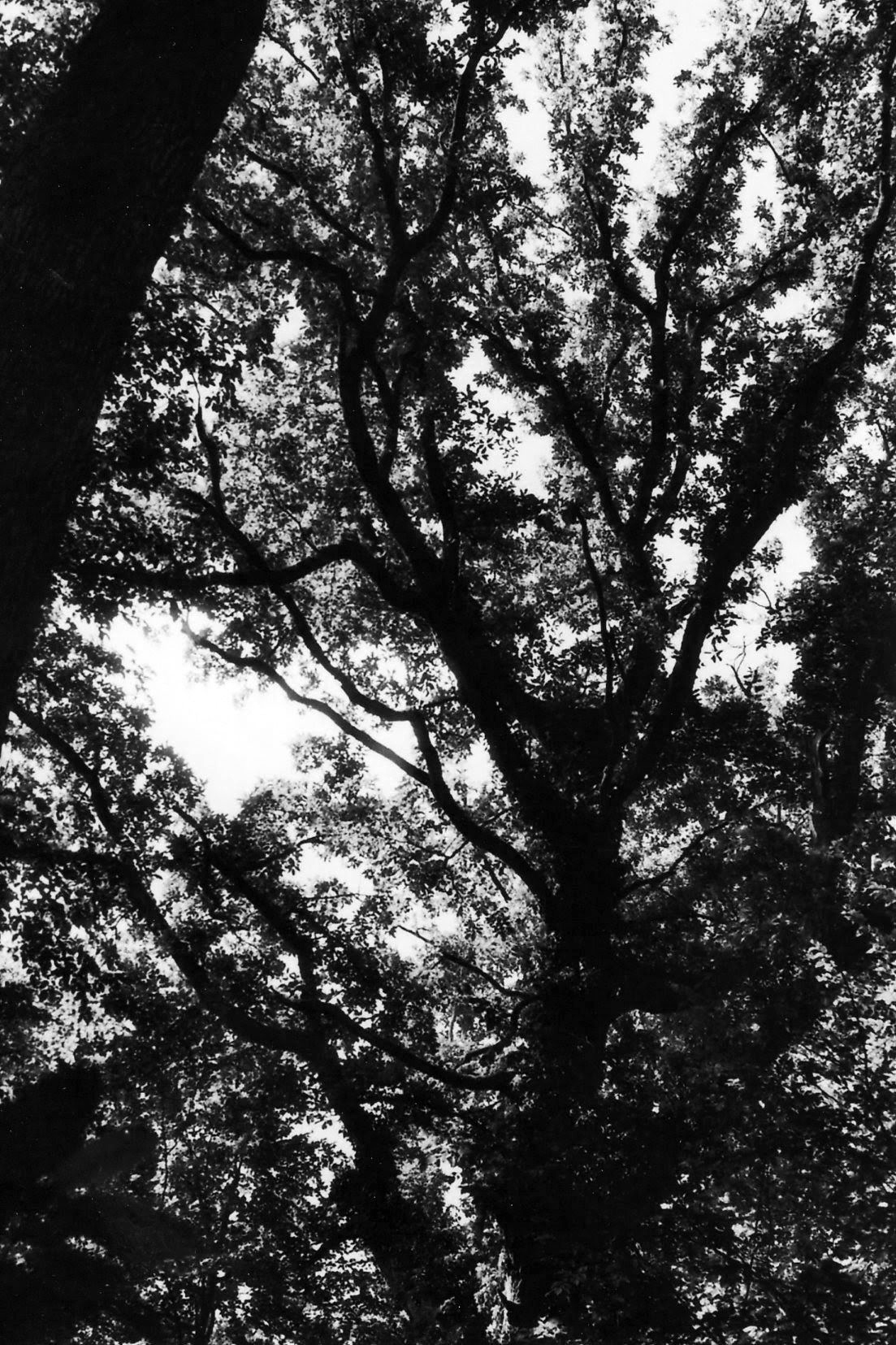 View through the treetops, branches and leaves.