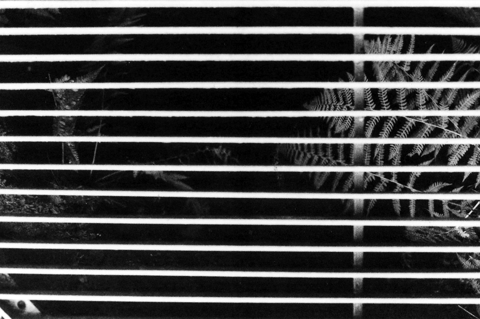 White lit gutter forming horizontal stripes on a dark background. Fern is under the gutter on the right, other plants on the left.