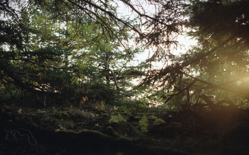 A photo towards the sunset through a thick forest.