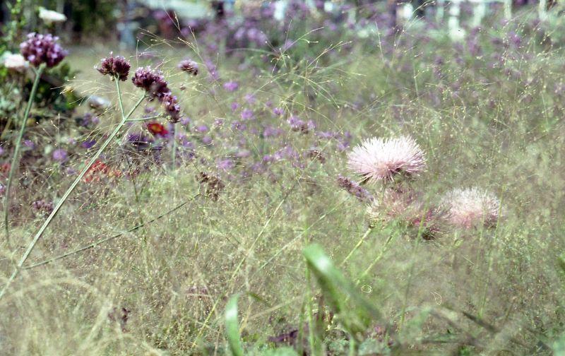 A flowery grassy macro shot.