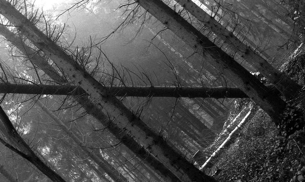 A black and white picture in a forest tilted in a way so a fallen over tree is the horizontal of the image. This is shot in winter, as you can see little snow covering the forest.